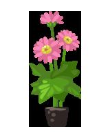new-gardening-flower_pink-dahlia
