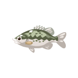 FISH_spotted-bass