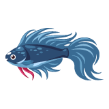 fish_blue-betta