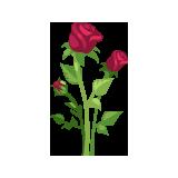 GARDEN_homegrown-red-rose
