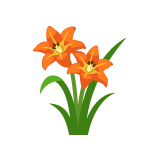 Orange-Daylily