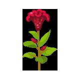 Red-Celosia