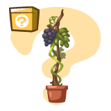 New MB items Database Mb-grape-vines